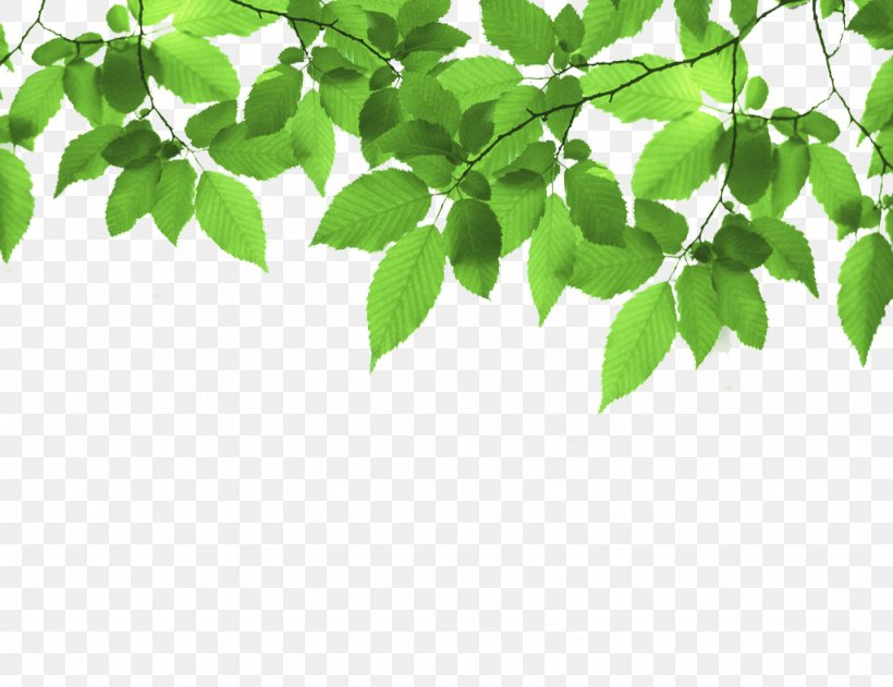 Green Leaf Stock Photography, PNG, 1024x788px, Green, Alamy, Blue, Branch, Color Download Free
