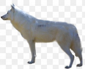Wolf - Alaskan Malamute Arctic Wolf Arctic Fox Alaskan Tundra Wolf PNG
