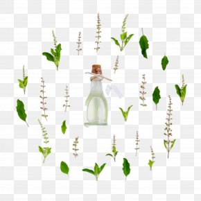 Vascular Plant Lily Of The Valley - Green Leaf Bottle Plant Grass PNG