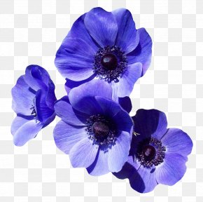 Purple Flower - Flower Purple Clip Art PNG