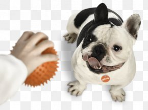 French Bulldog - Toy Bulldog French Bulldog Puppy Dog Breed PNG