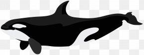 Orca Clip Art Image - Killer Whale Dolphin Clip Art PNG