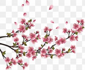Wildflower Magnolia - Floral Spring Flowers PNG