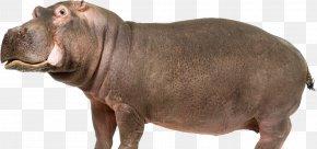 Hippo - Hippopotamus Computer File PNG