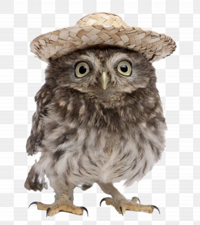 Hat Owl PNG