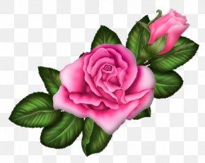 Pink Rose - Garden Roses Centifolia Roses Rosa Chinensis Floribunda Pink PNG