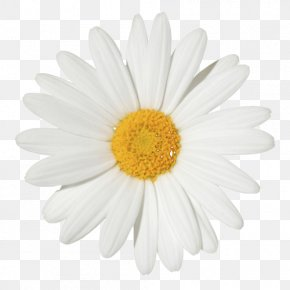 Flower Garland - Common Daisy Flower Chamomile Stock Photography Clip Art PNG