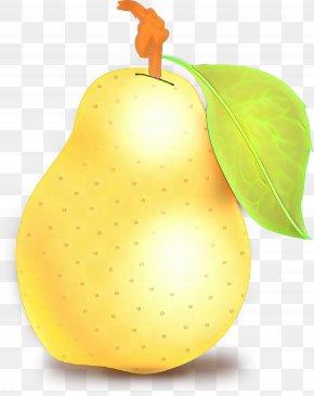 Fruit Tree Natural Foods - Fruit Tree PNG
