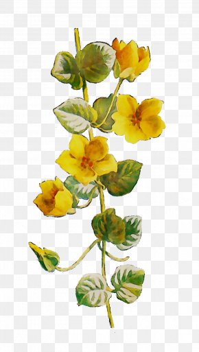 Cut Flowers Yellow Plant Stem Flowering Plant PNG