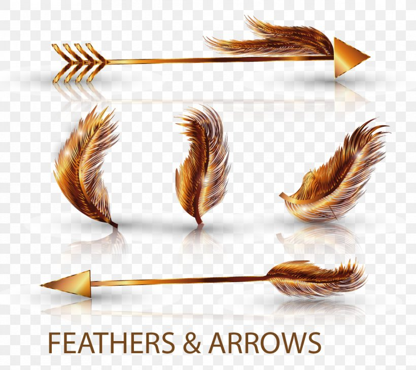 Feather Euclidean Vector Arrow Png 1165x1036px Feather Material Template Download Free