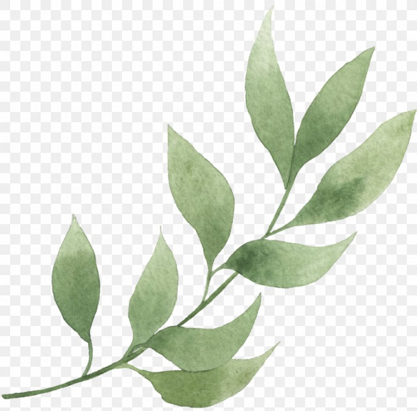 Plant Leaf Flower Tree Bay Leaf Png 886x873px Plant Bay Leaf