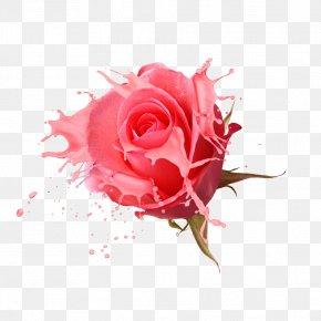 Rose Creative - Rosa Chinensis Designer PNG