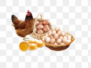 Egg - Chicken Egg Poster Advertising PNG
