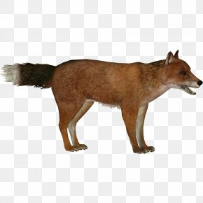 Fox - Red Fox Zoo Tycoon 2: Extinct Animals Falkland Islands Wolf Dhole Extinction PNG