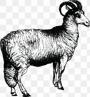Sheep Vector - Argali Welsh Mountain Sheep Leicester Longwool Clip Art PNG