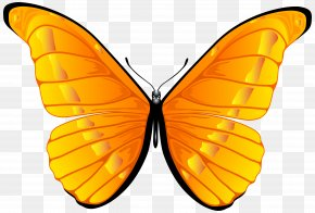 Orange Butterfly Clip Art Image - Butterfly Orange Clip Art PNG