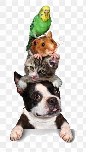 Animal - Cat Pet Sitting Hamster Dog Kitten PNG