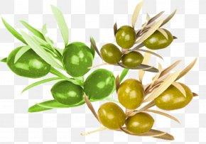 Olive Nutrition Material - Olive Food Nutrition PNG