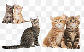 Cute Little Kitty - Cat Kitten Dog Pet Sitting Puppy PNG