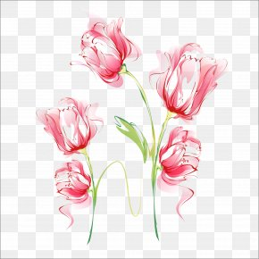 Beautiful Flowers Vector - Carnation Watercolor Painting PNG