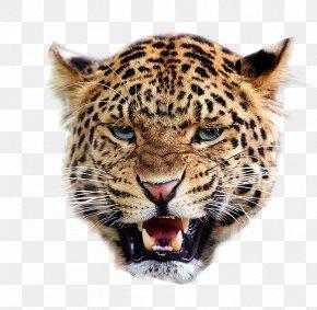 Cheetah - Jaguar Lion Snow Leopard Felidae Giraffe PNG