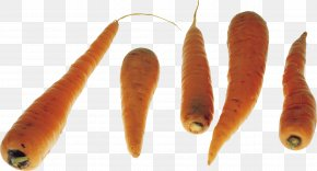 Carrots Image - Carrot Vegetable PNG