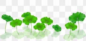 Lotus Vector Material - Nelumbo Nucifera Euclidean Vector Aquatic Plant PNG
