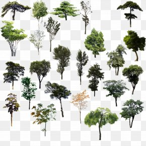 Trees Psd Material - Tree Adobe Illustrator PNG