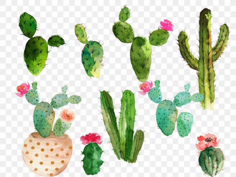 Cactaceae Watercolor Painting Drawing, PNG, 4000x3000px, Cactaceae, Cactus, Cactus Flower, Caryophyllales, Drawing Download Free