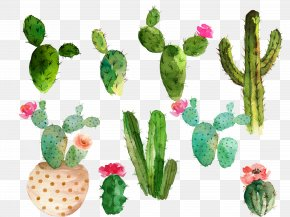 Drawing Cactus Flowering Cactus Collection - Cactaceae Watercolor Painting Drawing PNG