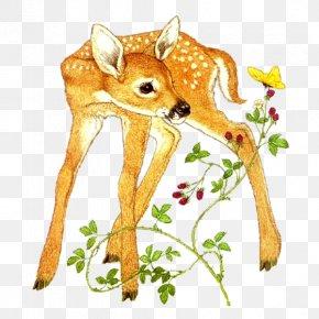 Deer - Roe Deer Red Deer Felidae Sika Deer PNG
