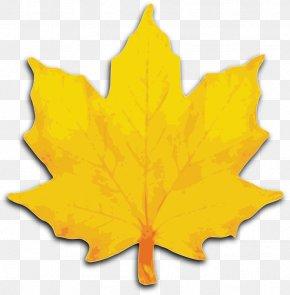 Leaf Clip Art - Autumn Leaf Color Yellow Maple Leaf Clip Art PNG