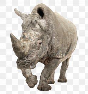 Rhino Approaching - Black Rhinoceros White Rhinoceros PNG