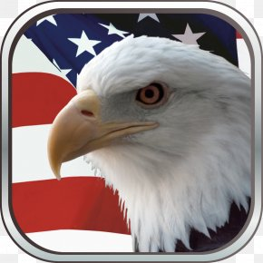 Usa Gerb - Bald Eagle Flag Of The United States Independence Day PNG