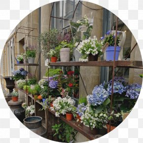 Window - Floral Design Window Flowerpot Flowering Plant Houseplant PNG