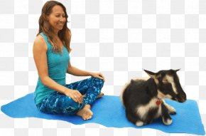 Goat - Goat Yoga Instructor Pet Animal-assisted Therapy PNG