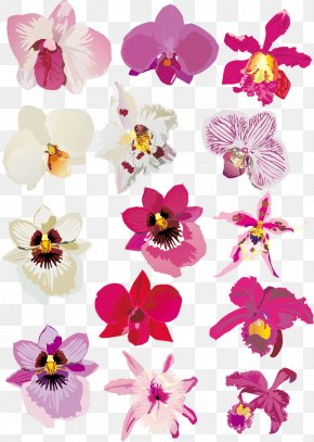 Orchid Vector Material - Orchids Euclidean Vector Download PNG