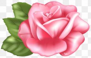 Pink Rose Transparent Clip Art Image - Rose Pink Clip Art PNG