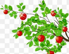 Beautiful Apple Tree - Tree Apple Cartoon PNG