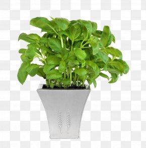 Potted Plants - Flowerpot Plant Cone Garden PNG