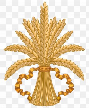 Wheat - Wheat Caryopsis Clip Art PNG