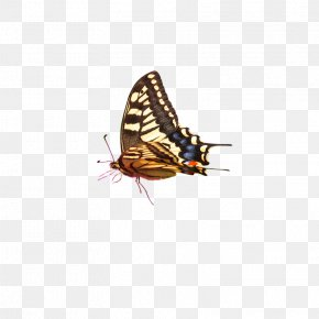 Butterfly - Computer Graphics PNG