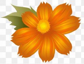 Orange Flower Clip-Art Image - Clip Art PNG