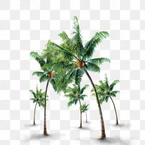 Emerald Coconut Tree - Coconut Tree PNG