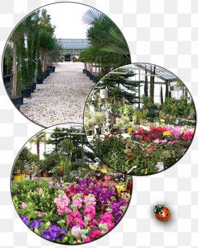 Activite - Pépinières Paysages Thibault Botanical Garden Landscaping Floristry PNG