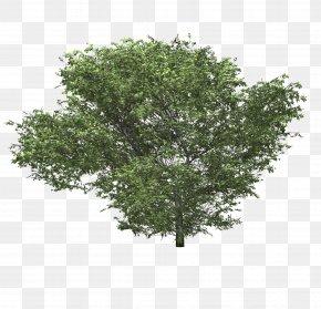 Bushes - Shrub Tree Woody Plant Hydrangea PNG