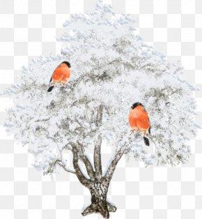Boar - Blog Tree Winter Albom Clip Art PNG