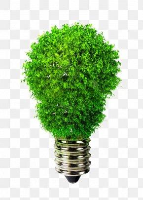 Creative Whine Bulb - Light-emitting Diode LED Lamp Efficient Energy Use Incandescent Light Bulb PNG