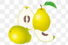 Cut Pears - Euclidean Vector Fruit Clip Art PNG