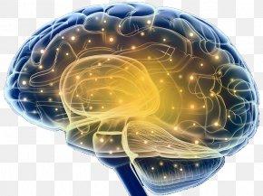 Brain Structure Neurons - Brain Neuron Nervous System Nerve Pons PNG